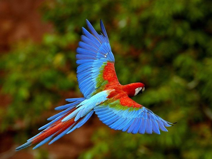 Thought for the day! Some birds aren't meant to be caged, Their feathers are just too bright