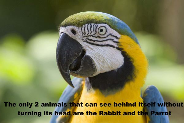 Interesting Fact -