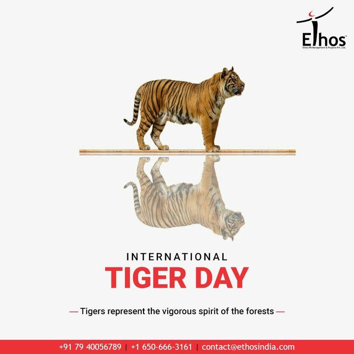 Tigers represent the vigorous spirit of the forests.  #InternationalTigerDay! #InternationalTigerDay2020 #TigerDay #SaveTheTiger #Tigers #EthosIndia #Ahmedabad #EthosHR #Recruitment #CareerGuide #India